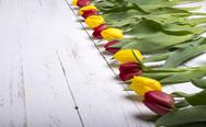 Stock Photo of tulips on white wooden planks eves