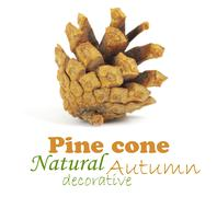 Pine cone isolated on white, clipping path included Stock Illustration
