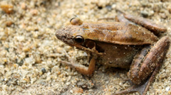 Frog in the sand Stock Footage