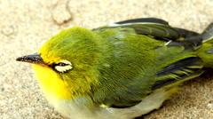small bird - stock footage