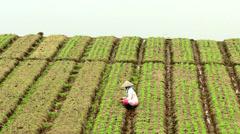 Peasant woman working in vegetable field Stock Footage