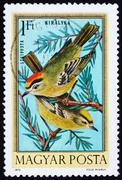 Stock Photo of Postage stamp Hungary 1921 Firecrests, Birds