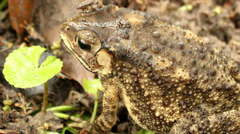Toad in the garden Stock Footage