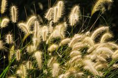 flower grass impact sunlight - stock photo