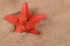 the starfish on sand - stock photo