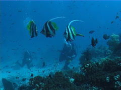 Distant group of scuba divers cleaning and being cleaned on deep coral reef with Stock Footage