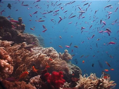 Ocean scenery on shallow coral reef, UP5682 Stock Footage