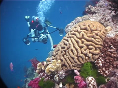 Housed SLR photographer taking images on coral bommie with Unidentified brain Stock Footage