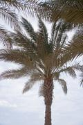 Stock Photo of African Palm trees at bright summer day