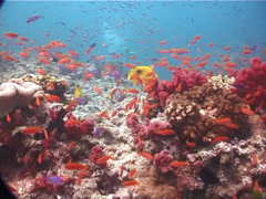 Ocean scenery on shallow coral reef, UP5878 Stock Footage