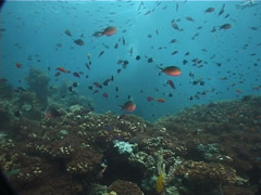 Ocean scenery on shallow coral reef, UP5905 Stock Footage