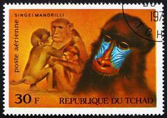 Postage stamp Chad 1972 Mandrills, African Wild Animals - stock photo