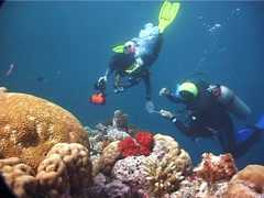 Dive guide and guest on shallow coral reef in Fiji Islands, UP6003 Stock Footage