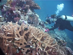 Housed SLR photographer looking around on shallow coral reef with mixed hard Stock Footage
