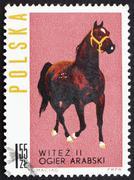Postage stamp Poland 1963 Arab Stallion Stock Photos