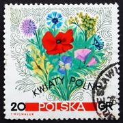 Postage stamp Poland 1967 Flowers of the Meadows - stock photo