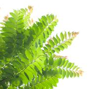 Green leaves on white background. Stock Photos