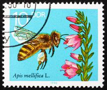 Postage stamp GDR 1990 Blooming Heather, Bees Collecting Nectar - stock photo