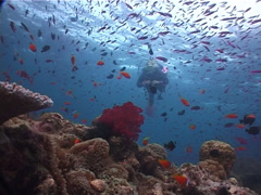 Ocean scenery on shallow coral reef, at dusk, UP6198 Stock Footage