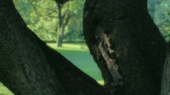Tree Trunk Park Tuscany Summer Sunset Italy - 25FPS PAL - stock footage