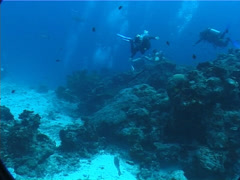 Group of scuba divers swimming in deep channel with Black-blotched stingray in Stock Footage