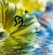 Yellow lilly reflected in rendered water Stock Photos