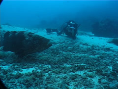 Videographer camera duel in deep channel with Malabar grouper in Fiji Islands, Stock Footage