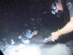 Buddy team of scuba divers taking images on sand in Fiji Islands, UP6625 Stock Footage