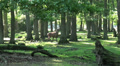 Red Deer in sunny forest landscape HD Footage
