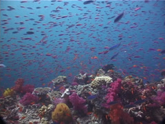 Ocean scenery on shallow coral reef, UP6660 Stock Footage