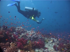Photographer with strobe flash swimming on shallow coral reef in Fiji Islands, Stock Footage