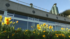 Vancouver Urban Daffodils dolly shot Stock Footage