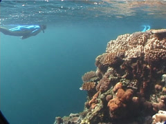 Freedivers swimming on very shallow reef and surface in Fiji Islands, UP6725 Stock Footage