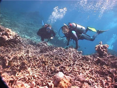 Buddy team of scuba divers watching the critters on rubble with Banded sea krait Stock Footage