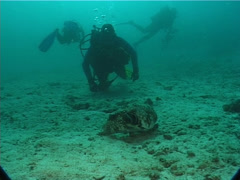 Group of scuba divers watching the critters on sand and coral rubble with Stock Footage