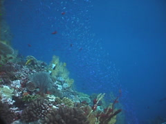 Ocean scenery on shallow coral reef, UP7525 Stock Footage