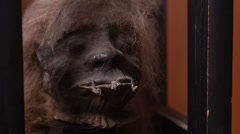 Shrunken Head Creepy Scary Horror Indian Face Extreme Close Up Stock Footage