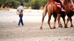 Tourist camel riding pass Stock Footage