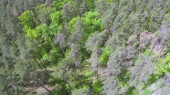 Wood panorama, top view. Aerial Stock Footage