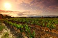 Orange Sky over Green Vineyard Stock Photos