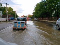 transport animals to safety through a flooded road with car, evacuate animals - stock photo