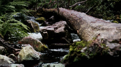 Fallen Tree Log Laying over Boulder Filled Forest River - 29,97FPS NTSC Stock Footage