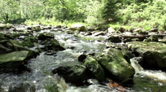 Small forest river in Parc naturel The High Fens (Belgium). Stock Footage