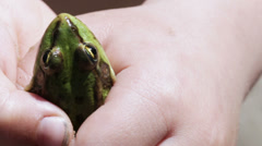 Frog in hand Stock Footage