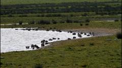 Lake and Pochard Ducks Stock Footage