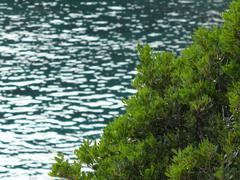 The Adriatic Sea behind the tree - stock photo