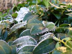 Stock Photo of Freeze on the leaves