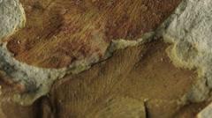Fossil of Glossopteris leaf Stock Footage