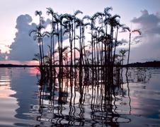 Stock Photo of amazonian rainforest. laguna grande, national park cuyabeno. ecuador