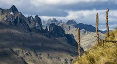 Andes. cajas national park, andean highlands, ecuador Stock Photos